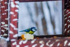 Pássaro amarelo do tomtit em uma tabela do alimentador Fotografia de Stock