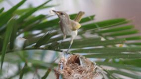 Pássaro amarelo pequeno do zumbido vídeos de arquivo