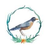 Pássaro americano do pisco de peito vermelho da aquarela Imagens de Stock Royalty Free