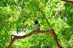 Pássaro asiático que senta-se no tronco de árvore no parque com luz do sol imagens de stock