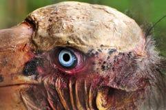 Pássaro assustador Fotografia de Stock Royalty Free