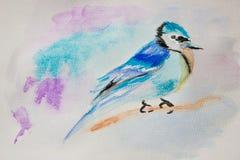 Pássaro azul em um ramo fotografia de stock royalty free
