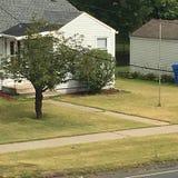 Pássaro azul no fio Foto de Stock Royalty Free