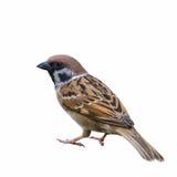 Pássaro bonito isolado imagem de stock