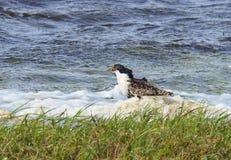 Pássaro bonito no campo de inundação perto da água, Lituânia imagens de stock royalty free