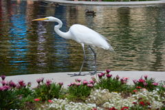 Pássaro bonito no parque do balboa Fotografia de Stock
