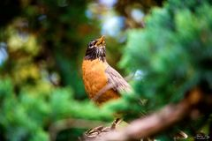 Pássaro bonito que aprecia o dia ensolarado Fotos de Stock