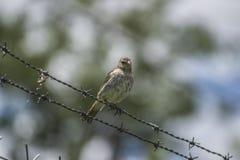 Pássaro bonito que está em uma fiação com fundo do borrão imagens de stock