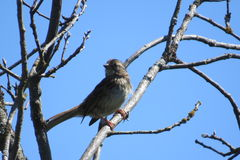 Pássaro bonito que toma um sunbath Fotos de Stock Royalty Free