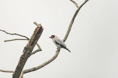 Pássaro branco com penas pretas fotografia de stock royalty free