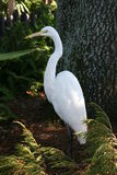 Pássaro branco entre plantas Imagens de Stock