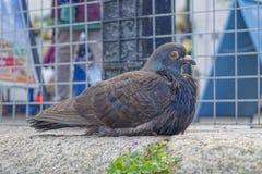 Pássaro Brixham Devon England Reino Unido Fotos de Stock