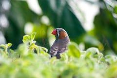 Pássaro cinzento bonito fotos de stock royalty free