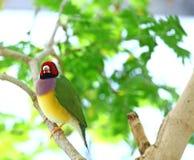 Pássaro colorido Imagem de Stock Royalty Free