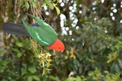 Pássaro colorido Fotos de Stock Royalty Free