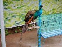 Pássaro colorido em China ilustração do vetor