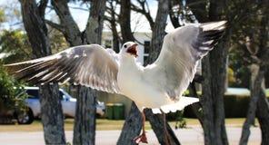 Pássaro com fome imagem de stock