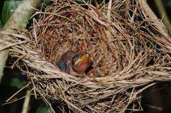 Pássaro com fome fotografia de stock