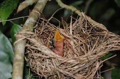 Pássaro com fome fotografia de stock royalty free