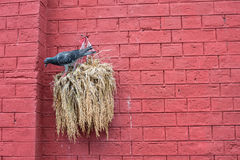 Pássaro com a parede de tijolo vermelho fotografia de stock