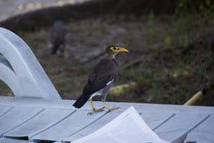 Pássaro com um bico amarelo no banco Fotos de Stock Royalty Free