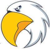 Pássaro corajoso da águia Imagem de Stock