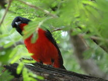Pássaro curioso Foto de Stock Royalty Free