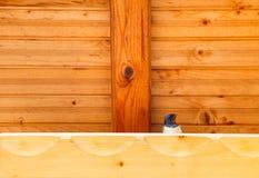 Pássaro da andorinha sob um abrigo de madeira Fotografia de Stock