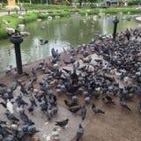 Pássaro da arte Foto de Stock