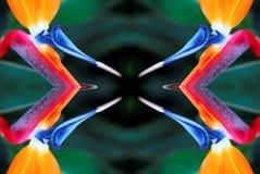 Pássaro da arte da flor de paraíso Imagens de Stock