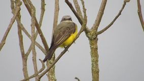 Pássaro da avenida da natureza vídeos de arquivo