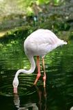 Pássaro da cegonha Imagem de Stock Royalty Free