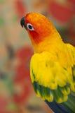 Pássaro da cor Fotografia de Stock Royalty Free