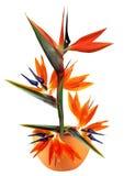 Pássaro da flor de paraíso no potenciômetro ilustração stock