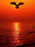 Pássaro da gaivota da silhueta Fotografia de Stock Royalty Free
