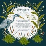 Pássaro da garça-real e e plantas de pântano Flora e fauna do pântano Projete para a bandeira, o cartaz, o cartão, o convite e o  ilustração royalty free