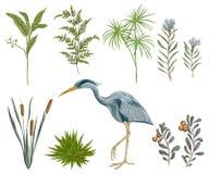 Pássaro da garça-real e plantas de pântano Flora e fauna do pântano ilustração stock