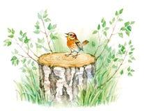 Pássaro da ilustração da aquarela Fotos de Stock