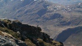 Pássaro da montanha Fotos de Stock Royalty Free