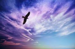 Pássaro da mosca da rapina no céu nebuloso azul Imagem de Stock Royalty Free