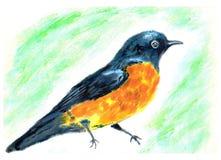 Pássaro da pintura a óleo Foto de Stock Royalty Free