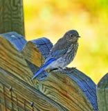 Pássaro da porta Fotografia de Stock Royalty Free