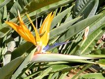 Pássaro da universidade da barra-Ilan de paraíso 2010 Foto de Stock Royalty Free