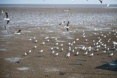 Pássaro das gaivotas no mar Bangpu Samutprakarn Tailândia Fotografia de Stock Royalty Free