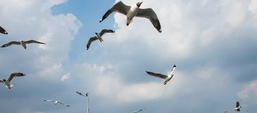 Pássaro das gaivotas no mar Bangpu Samutprakarn Tailândia fotografia de stock