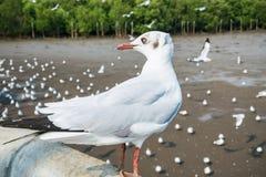 Pássaro das gaivotas no mar Bangpu Samutprakarn Tailândia imagem de stock royalty free