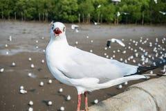 Pássaro das gaivotas no mar Bangpu Samutprakarn Tailândia fotos de stock royalty free