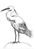 Pássaro de água da ilustração Ilustração Stock