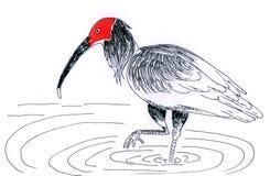 Pássaro de água da ilustração Ilustração do Vetor