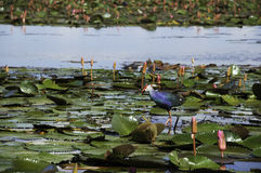 Pássaro de água vivo no parque fotografia de stock royalty free
